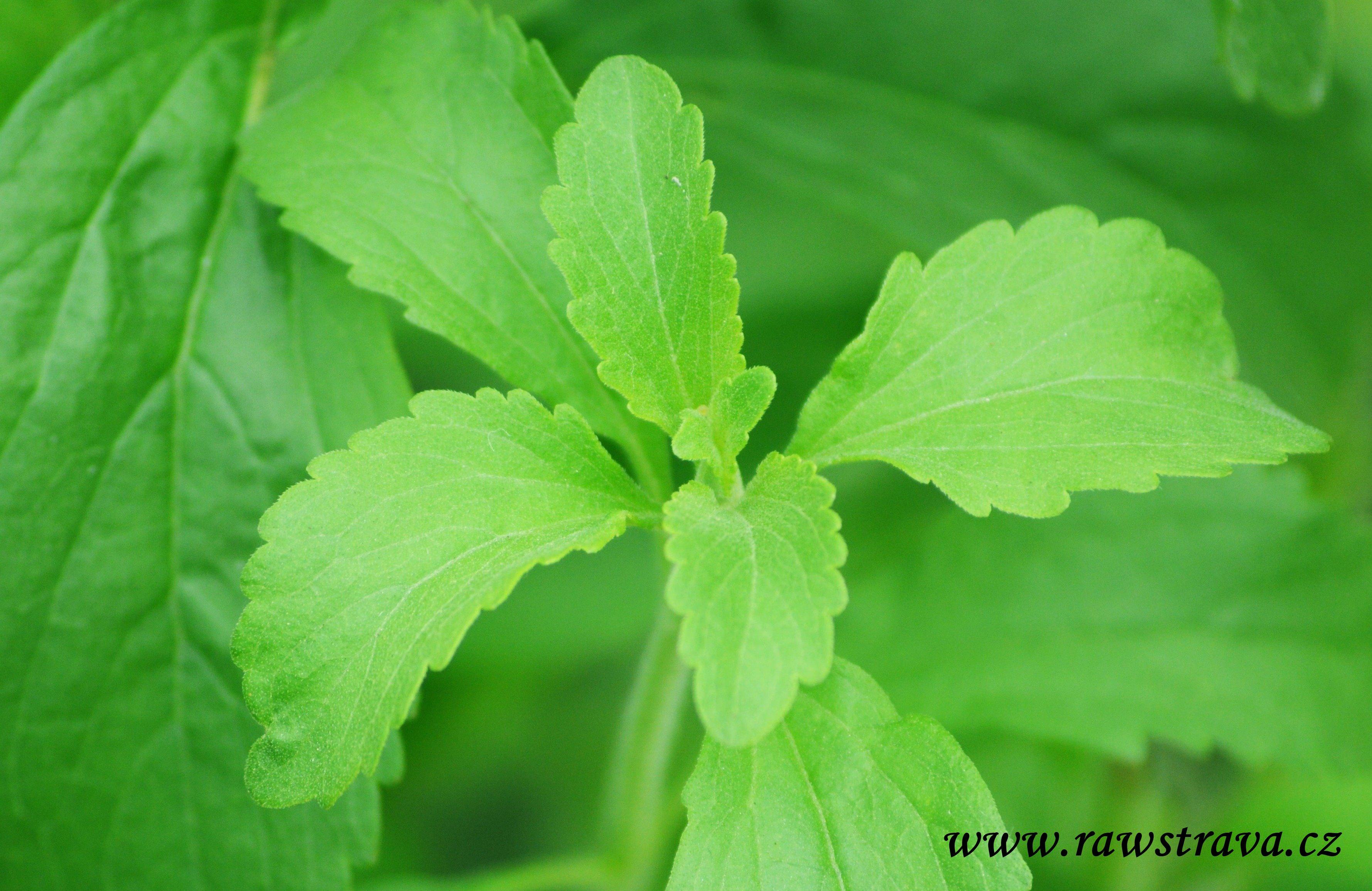 Luxusn pomocn k zvan glykemick index rawstrava for Stevia pianta